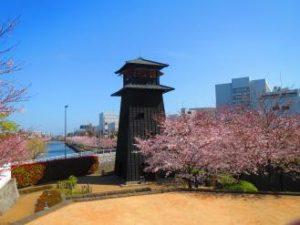 新川千年桜