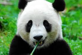 台東区上野動物園➀